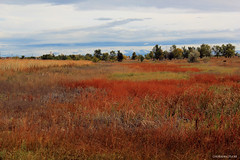 autumn field (Coloraura) Tags: autumn mountains fall colors field clouds rockies colorado fallcolors fortcollins mountainrange autumnfield vision:sunset=0656 vision:mountain=0719 vision:sky=0642 vision:outdoor=0891