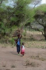 10071661 (wolfgangkaehler) Tags: africa people woman tanzania person african firewood carrying lakemanyara eastafrica eastafrican tanzanian environmentalimpact tanzaniaafrica environmentalissue lakemanyaratanzania environmentalconcern {vision}:{outdoor}=0986 {vision}:{plant}=0551