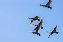 _IGP3487 (natsuki90) Tags: sky bird pentax k5    gettyimagesjapan