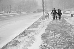 Snowy Day (slightheadache) Tags: nyc newyorkcity winter blackandwhite bw snow newyork storm brooklyn blizzard juno winterstorm snowyday 2015 juno2015