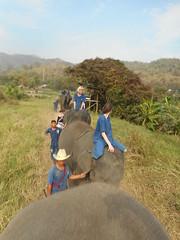 Paulinka - Thia Elephant Home