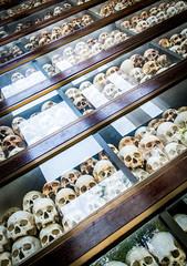 PPB_7246 (PeSoPhoto) Tags: skulls rouge nikon asia cambodia khmer killing pot xp bones fields ek dictator phnom massgraves penh pol dictatorship humanremains khmerrouge polpot 2016 massgrave atrocity choengek choeng d7100