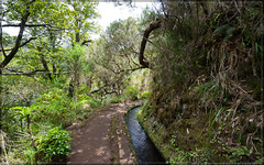 Madeira (00015 von 00021) (exaptor) Tags: sea beach waterfall sony madeira funchal zeiss1635 sonya7