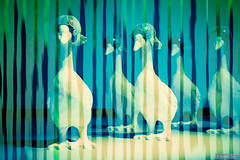 Ready for a night out (Anneke Jager) Tags: texture animal animals canon fineart goose gans ganzen concept icm textured textuur conceptuel conceptueel annekejager