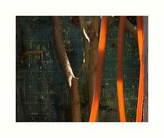 cho (hlne chantemerle) Tags: panorama orange france soleil divers lumire jardin vert arbres extrieur vue paysages murs objets ombres photographies palissade verticales vgtaux naturesmortes photosderue
