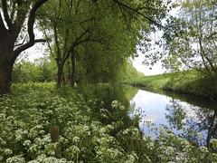 Lievelingsplekje (Dimormar!) Tags: reflection water bomen natuur dijk weerspiegeling fluitekruid hoogvliet zalmplaat