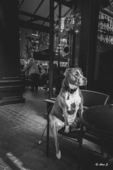 Take A Break (Photo Alan) Tags: street city urban blackandwhite dog pet canada vancouver blackwhite streetphotography doggy gastown leicaq streetpet dogincity petintown