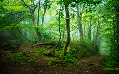 Spring Woodland (J C Mills Photography) Tags: morning trees two england mist leaves forest woodland landscape spring dale district derbyshire peak darley dales matlock