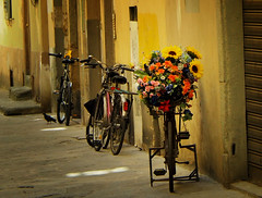 Happy Wednesday (bjg_snaps) Tags: bicycle flowers bouquet gift present charming floral floralarrangement florence italy firenze italia romantic golden glow