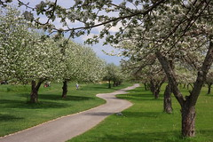 Lost Ball (Bert CR) Tags: flowers trees hot golf spring colorful warm blossoms springblossoms fruittrees appleblossoms warmweather lostball unseasonably
