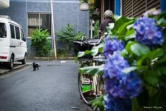 (JIMALOG) Tags: cat olympus  alleycat omd straycat em1