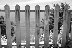 DSC_2327.jpg (dave_dubyuh) Tags: flowersplants landscape macro summer bayarea bigsur bridge california coast flowers mcwayfalls nature nikon ocean park sanfrancisco sf
