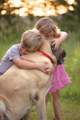 A true friend... (Marla Nutbrown) Tags: light dog pet sun english love beautiful grass childhood animal kids children outdoors bokeh mastiff touching naturallightphotography marlanutbrownphotography