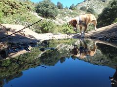 Wildson doble. (.carleS) Tags: del olympus perro gos barranc wildson caeduiker tg850 galitero