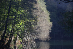 yedigller (ercan_fb) Tags: park trees reflection forest national yedigller
