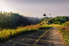 Beautiful Bali (mikedeclerck) Tags: travel trees bali sun travelling nature sunrise canon indonesia tea hiking walk travellers hike palm adventure jungle nationalgeographic naturelovers natgeo 700d