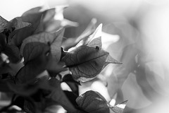 Light... (Greta Powell) Tags: flowers light blackandwhite