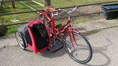 SamSam  doggie  sidecar from Holland (The bike guy !) Tags: holland dutch england wirral idea berkel bike bicycle cycles sequin aad kinlan