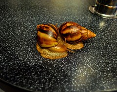 # # # # # #city #town #Stadt #ville #ciudad #cidade # #chekhov # #snail #caracol #lumaca #schnecke #escargot #achatina #achatinafulica #animal #pet #fauna #instalike #follow4follow #like (jacksparrow34) Tags:  instalike fauna stadt caracol   city  schnecke 2016 achatina ciudad animal russia ville lumaca pet  chekhov follow4follow  likeforlike escargot snail  summer town achatinafulica cidade