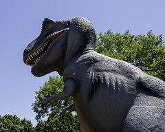 T-Rex_SAF4637 (sara97) Tags: outdoors missouri saintlouis trex forestpark tyrannosaurus citypark urbanpark photobysaraannefinke tyrantlizard copyright2016saraannefinke