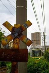 Toei Streetcar (Toden) Arakawa Line (Yorkey&Rin) Tags: june japan tokyo olympus rin 2016  em5 lumixg20f17 toeistreetcartodenarakawaline t6241097