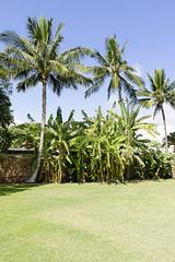 Palms and Banana Old Lahaina Prison (rschnaible) Tags: old trees usa tree palms botanical hawaii us tour pacific outdoor sightseeing maui banana prison tropical tropics interest grounds touring lahaina