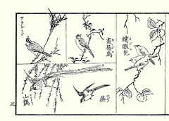 Left top and center  black-faced bunting, meadow bunting; Left bottom  blue magpie and barn swallow; Right  Japanese persimmon and Japanese white-eye (Japanese Flower and Bird Art) Tags: blue flower bird art japan barn japanese book picture meadow persimmon magpie swallow woodblock kobayashi kaki bunting whiteeye japonicus ukiyo blackfaced diospyros rustica emberizidae corvidae hirundo hirundinidae emberiza zosterops zosteropidae cioides ebenaceae spodocephala urocissa erythrorhyncha readercollection yonezo