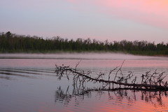 Lake Itasca (Justin C Lenk) Tags: lake itasca