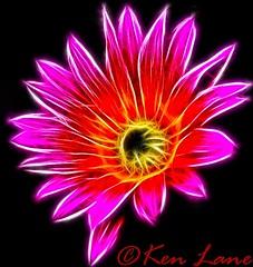 Flower in Fractalius