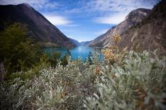 Dry Bush (Junnn) Tags: lake canada bush britishcolumbia dry setonlake 1635mmf28 canonef1635mmf28liiusm canoneos5dmarkii circleroutedrive