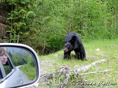 Bear mirror (RhondaRCallow) Tags: bear boy canada nature car forest bc britishcolumbia wildlife perspective vancouverisland vehicle blackbear