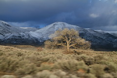 Lone Nevada Tree (Nick / KC7CBF) Tags: mountain snow tree highway snowy nevada barren sagebrush