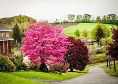 Pretty in Pink (Images by April) Tags: canon pennsylvania 5d markii westernpennsylvania