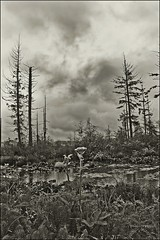 wetlands (jim ward) Tags: sky blackandwhite bw plants water clouds pond flora grasses