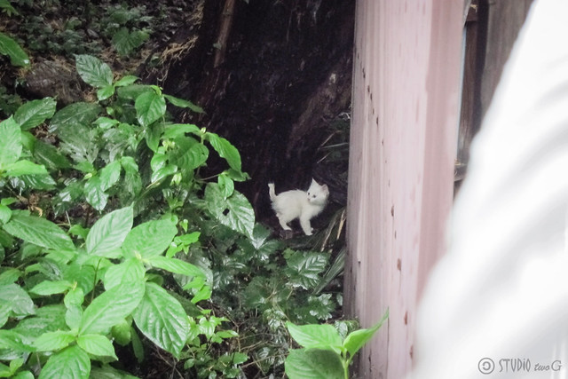Today's Cat@2013-06-21