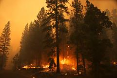 Flare ups -- Yosemite Rim Fire (gcquinn) Tags: california wild usa fire geoff yosemite quinn geoffrey rimfire