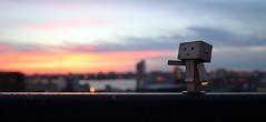 Chasing the light (ccho) Tags: sunset canon iso100 f35 yotsuba danbo danboard tse24mmlii