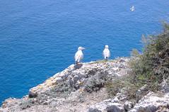 Gabbiani - Isola San Nicola (B&B Dimora Monsignore) Tags: travel italy mare monumento turismo viaggi monumenti puglia isoletremiti