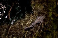 Fish (Adventurer Dustin Holmes) Tags: fish aquarium bassproshops bassproshop bassproshopsoutdoorworld bassproshopoutdoorworld