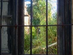 San Fernando (Alivetodance) Tags: trees green abandoned nature san buenos aires fernando