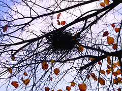 empty nest (All Shine) Tags: autumn plants art nature silhouette composition photography twilight graphics poetry outdoor branches melancholy