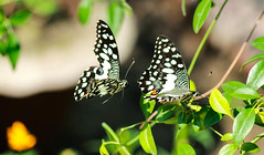 Friends Forever (Mahabub Hassan Rahul) Tags: friends love animals friendship butterflies neture immotion