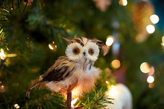 Wide Eyes (TerryJohnston) Tags: tree mi lights holidays dof bokeh michigan ornament meijergardens owl grandrapids gr 6d grap amazingmich canon6d canoneos6d frederickmeijergardensandsculpturepark