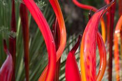 Chihuli 6 - Red Cattails (fenicephoto) Tags: phoenix chihuli desertbotanicalgarden 2014 chiluli2014