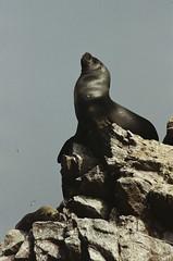(RoX4NnE) Tags: sea film peru analog canon landscape 50mm boat mar sand natural ae1 f14 iso arena ii 200 latinoamerica fujifilm desierto nacional reserva bote paracas proplus