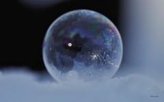 icebubble (Delena Jane) Tags: winter canada macro ice closeup newfoundland reflections ngc bubble conceptionbaysouth icebubble pentaxart delenajane