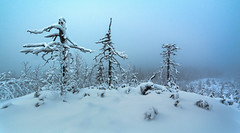 Cold Skeletons (Tore Thiis Fjeld) Tags: trees winter light mist snow oslo norway fog forest skeleton day turquoise samsung fade trunks nordmarka feathering kamphaug nx210 pwwinter