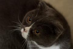 DSC_7569 (archiwu945) Tags: cat   carlzeiss ft1 zf2 zeissplanart1450zf2