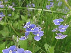 wildflowers (germancute) Tags: park flower tree germany deutschland thüringen thuringia blume baum germancute