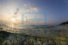2014 01 VOISIN MALDIVES-4898